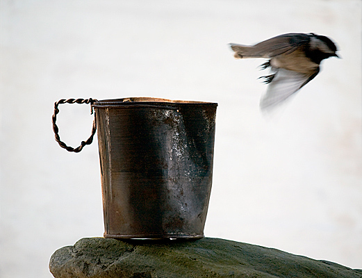 "photograph of ""Hobo Cup"""